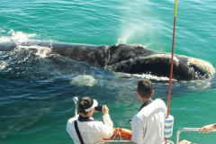 5. Southern Right Whale at our boat