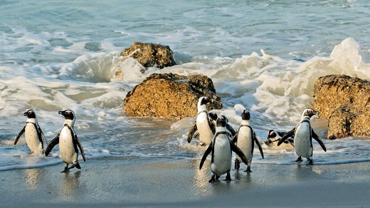 cape-town-penguin-colony
