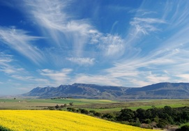 cape-town-garden-route-tour with the canola fields in the distance