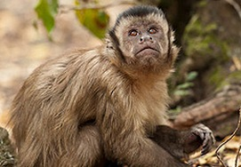 A monkey at Monkeyland, South Africa