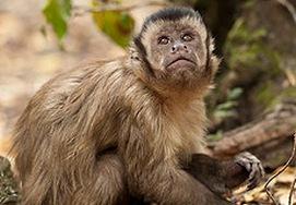 Monkeyland, South Africa