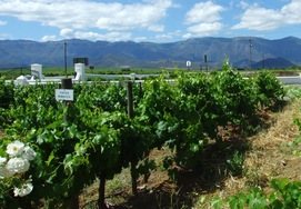 Cape winelands & sharks tour