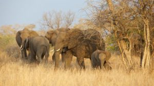 southern-africa-tours