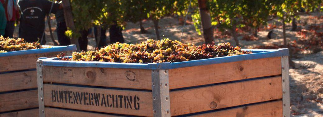 Buitenverwachting-wine-estate
