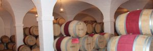 Cape Town Overnight winelands and Safari Tour