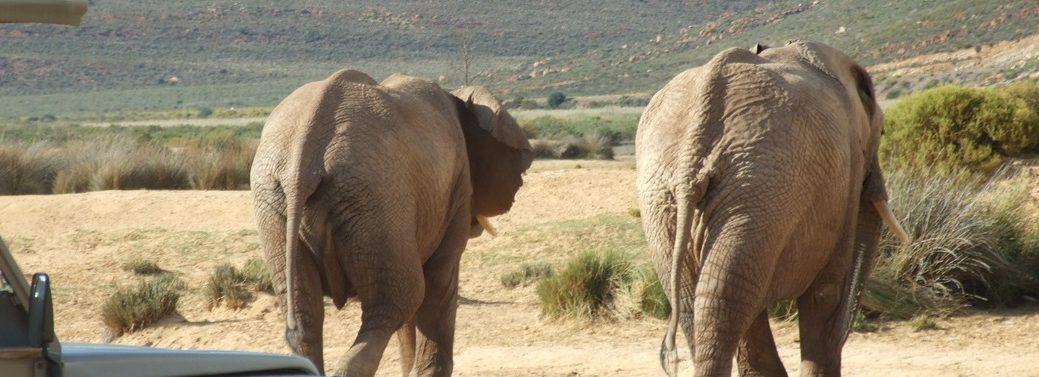 cape-town-short-tour-3daywinesafari-elephant