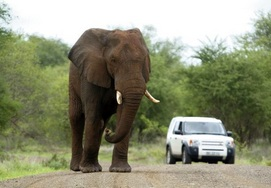 south-african-tour kruger park