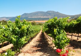 cape-town-winelands-holiday1