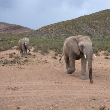 AQUILA ELEPHANTS