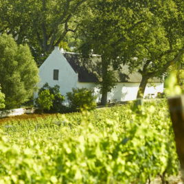 Buidenverwagting Wine Estate in the Constantia Valley