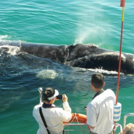 HERMANUS & WHALE ROUTE TOUR