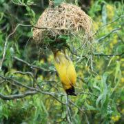 Birds of Eden in the Crags