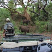 On safari in the Kruger National Park