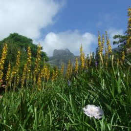 KIRSTENBOSCH & CONSTANTIA VALLEY TOUR