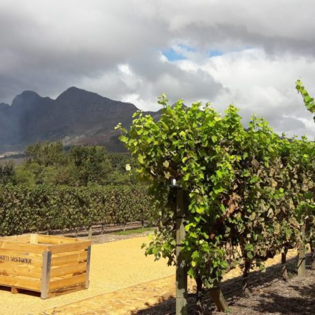 Babylonstoren Wine Estate