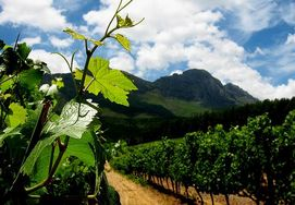 2 DAY CAPE WINELANDS