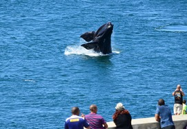 3 DAY WINELANDS & WHALE ROUTE