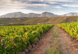 7 DAY SELF-DRIVE CAPE WINELANDS