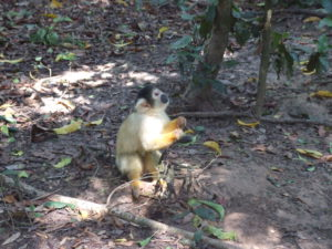 Some monkeys at Monkeyland up the Garden Route Area