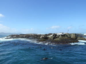 Seal Island at Hout Bay Harbour