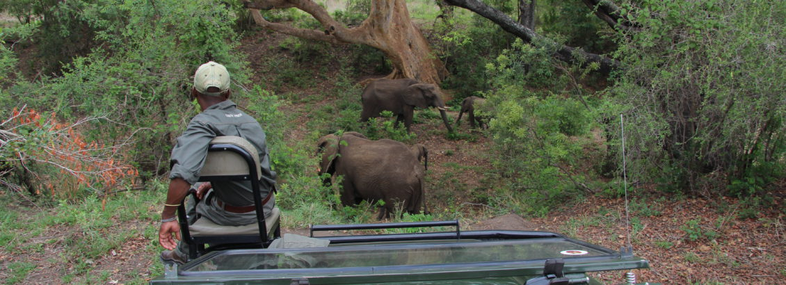 Enjoying an afternoon safari at Kruger National Park with Seascape Tours