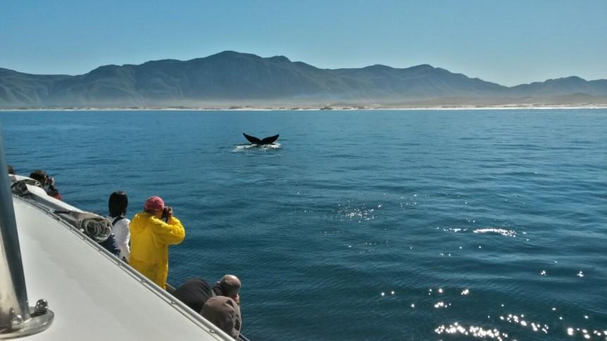 8. Beautiful conditions in Walker Bay in Hermanus