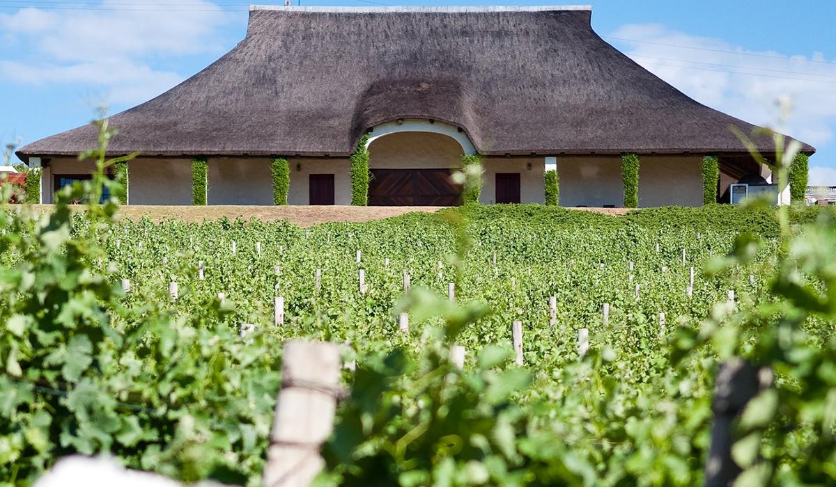 Vineyard at Bouchard Finlayson & Wine Tasting room