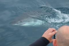 Sharks a few metres away