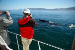 14. Whale watching in Walker Bay