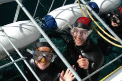 Couple in the Cage doing the Shark Cage Diving