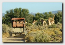 aquila-big-5-safari