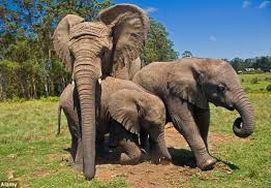 cape-town-garden-route-tour-Elephants