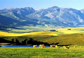 Cape-Town and -Garden-route 5 Day Private Tour experience
