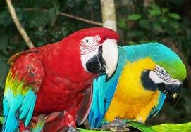 cape-town-garden-route-tour-parrots-at-birds-of-Eden