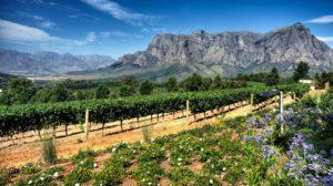 cape-town-winelands