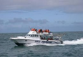 great-white-sharkdiving-tour