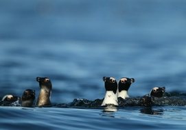 penguins-whale-watching-tour