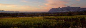 Groot-Constantia-vineyards