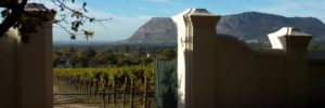 Groot-Constantia-vineyards2