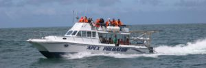 apex-predator-shark-diving