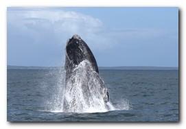 hermanus-whale-route