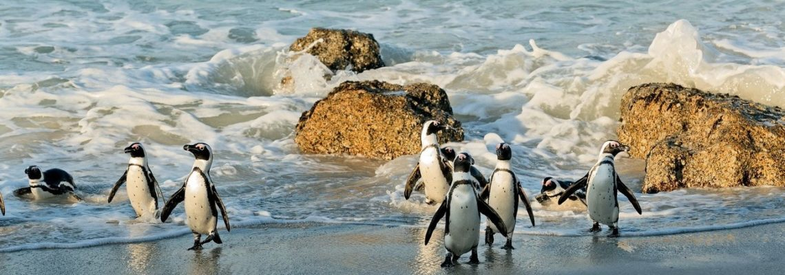 cape-town-south-african-tours10