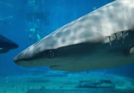 shark-at-ushaka-marine-world-2