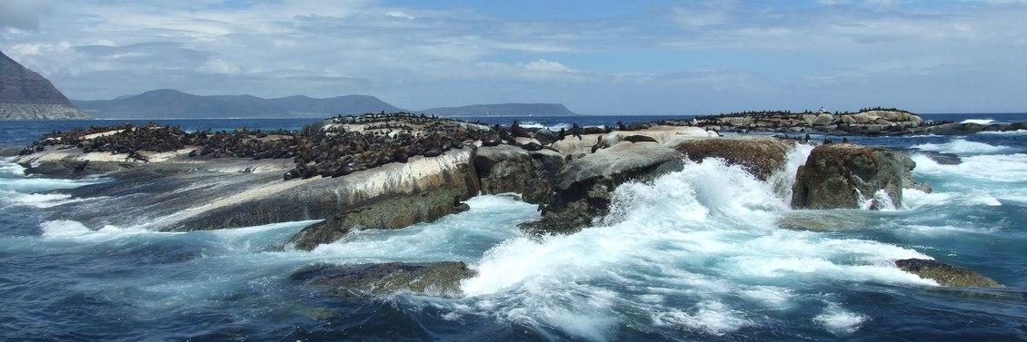 Cape Town seal island