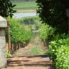 Fairview Estate winetasting and cheese tasting
