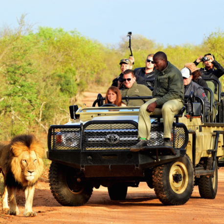 Kapama wildlife