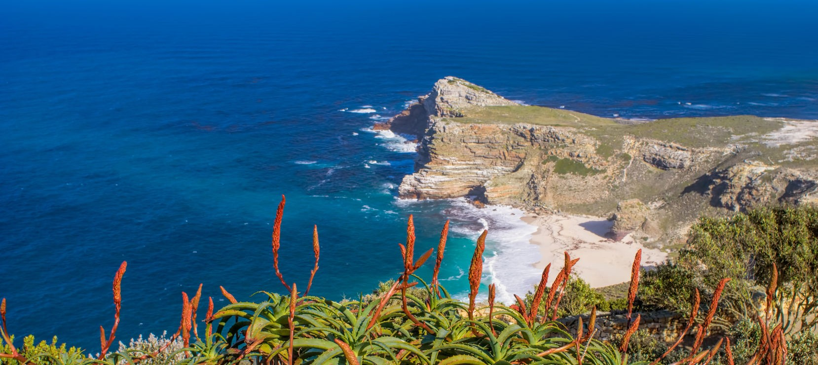 Aloes at Cape of Good Hope