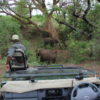 Kruger National Park on a Safari with Seascape Tours