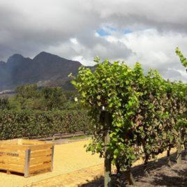 Babylonestoren Wine Estate