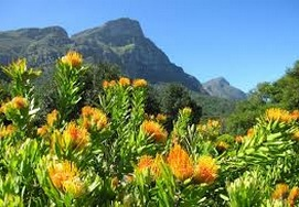 5 DAY CAPE TOWN HOLIDAY